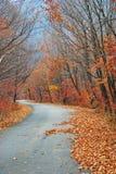 Blätter und die Straße Lizenzfreie Stockfotos