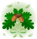 Blätter und Eicheln Stockbilder