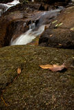 Blätter und Felsen nahe kleinem Wasserfall im Acadia-Nationalpark Stockfotos