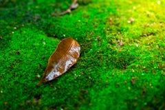 Blätter und grüner Mooshintergrund, Baum mit grünem Moos Eine Abbildung einer Batikauslegung in zwei Farbtönen Braun oder des Tan Lizenzfreie Stockfotos