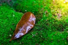 Blätter und grüner Mooshintergrund, Baum mit grünem Moos Eine Abbildung einer Batikauslegung in zwei Farbtönen Braun oder des Tan Lizenzfreie Stockbilder