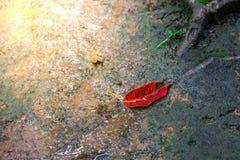 Blätter und grüner Mooshintergrund, Baum mit grünem Moos Eine Abbildung einer Batikauslegung in zwei Farbtönen Braun oder des Tan Lizenzfreies Stockfoto