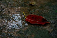 Blätter und grüner Mooshintergrund, Baum mit grünem Moos Eine Abbildung einer Batikauslegung in zwei Farbtönen Braun oder des Tan Stockfoto