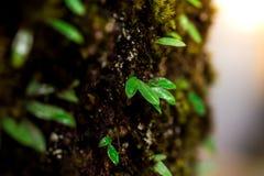Blätter und grüner Mooshintergrund, Baum mit grünem Moos Eine Abbildung einer Batikauslegung in zwei Farbtönen Braun oder des Tan Stockbild