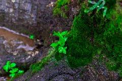 Blätter und grüner Mooshintergrund, Baum mit grünem Moos Eine Abbildung einer Batikauslegung in zwei Farbtönen Braun oder des Tan Stockfotos