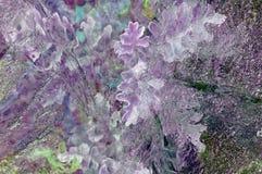 Blätter und Gras unter Eis Stockfotografie