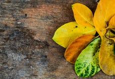 Blätter und hölzerner Hintergrund stockfoto