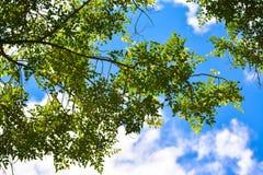 Blätter und Himmel lizenzfreie stockfotos