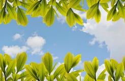 Blätter und Himmelhintergrund Lizenzfreie Stockfotos