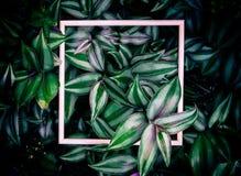 Blätter und Holzrahmen des Hintergrundes lizenzfreies stockbild