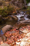 Blätter und kleiner Wasserfall Lizenzfreie Stockbilder