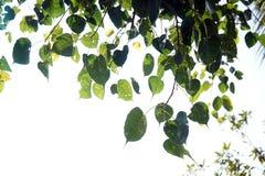 Blätter und Licht Lizenzfreie Stockfotografie