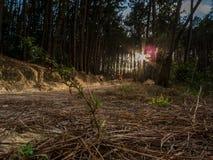 Blätter und Mountainbike-Reiter Stockbild