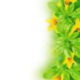 Blätter und Narzissen Lizenzfreies Stockfoto
