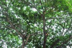 Blätter und Niederlassungen des Baums gegen den Himmel und die Sonne Lizenzfreie Stockfotografie