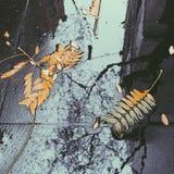 Blätter und Reflexionen Lizenzfreie Stockfotografie