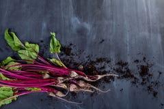 Blätter und Rote-Bete-Wurzeln der roten Rübe mit Boden Stockfotografie