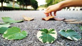 Blätter und Sammelnblatt als Hintergrund stockfoto