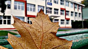 Blätter und Schule stockfotos