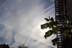 Blätter und Sonne Stockfotografie