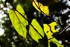 Blätter und Sonnenlicht Stockfotografie