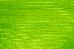 Blätter und Sonnenschein Lizenzfreie Stockbilder