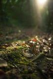 Blätter und Sonnenschein morgens Stockfotos