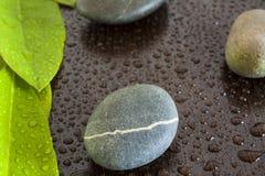 Blätter und Steine lizenzfreie stockfotos