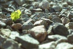 Blätter und Steine Stockfotos