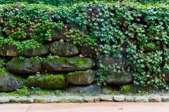 Blätter und Steinwand Lizenzfreies Stockfoto