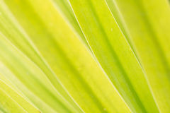 Blätter und Tageslicht Lizenzfreie Stockfotos
