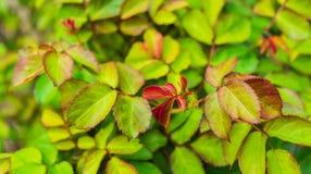 Blätter und Trieb auf einem Baum stockbild