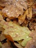 Blätter und Tropfen Stockfotografie