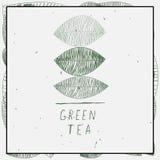 Blätter und Wörter des grünen Tees lizenzfreie abbildung