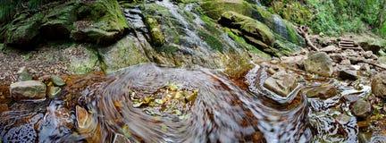 Blätter und Wasser Lizenzfreie Stockbilder