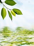 Blätter und Wasser Stockbild