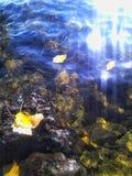 Blätter und Wasserblinzeln Stockfotografie