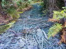 Blätter unter dem klaren Wasser lizenzfreies stockbild