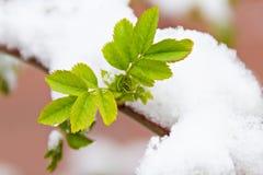 Blätter unter dem Schnee lizenzfreie stockfotografie