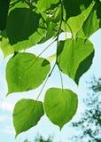 Blätter unter dem Sun Stockfotografie
