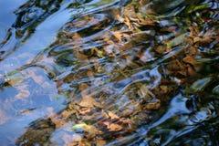 Blätter unter dem Wasser stockbilder