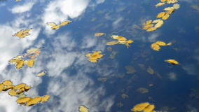 Blätter unter Wasser stock video