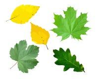 Blätter von Bäumen Vektor Abbildung