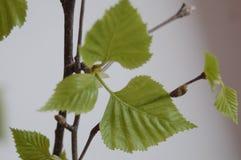Blätter von Bäumen haben beendet lizenzfreie stockfotografie