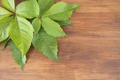Blätter von dekorativen Trauben Stockfotos