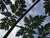 Blätter von der Unterseite Lizenzfreies Stockbild