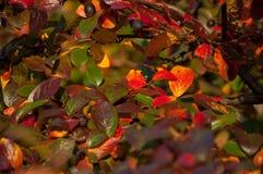 Blätter von Herbstfarben Lizenzfreies Stockfoto