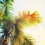 Blätter von Palmen in Sun-Licht Hintergrund für Reise-Karte Stockfotos