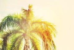 Blätter von Palmen in Sun-Licht Natürlicher Hintergrund Lizenzfreie Stockfotografie