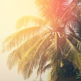 Blätter von Palmen in Sun-Licht Urlaubsreise-Karte Stockbild